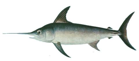 Swordfish trading system